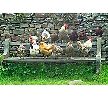 Hens on a bench Photographic Print