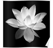 7 DAY'S OF SUMMER-YOGA ZEN RANGE- BLACK & WHITE LOTUS Poster