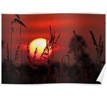Sunrise in the Delta Poster