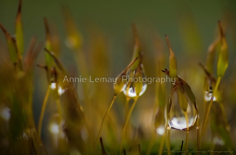 Stars on Sticks by Annie Lemay  Photography