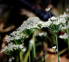 Two Sides To Chives by Ashli Zis