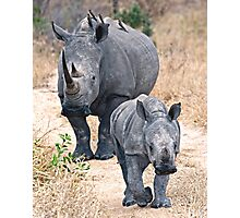 The Rhino Walk Photographic Print