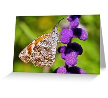 American Snout Butterfly Greeting Card