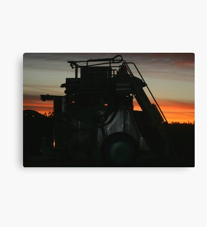 Grape Harvester at Work Canvas Print