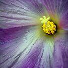 Purple Waves by Barbara  Brown