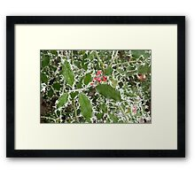 Frosty Holly in winter Framed Print
