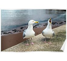 Two Herring Gulls Chatting Poster