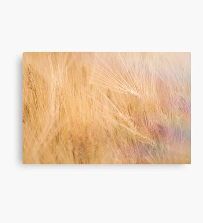 Golden field of Wheat Canvas Print