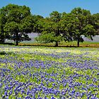 Field of Blue by Nick Conde-Dudding
