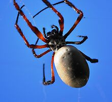 Up Close and Personal with a Spider by boofuls