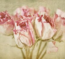 Roses by Evelyn Flint - Daydreaming Images