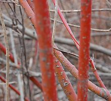 red twig in fall by redrob2000