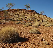 Spinifex by Liz Worth