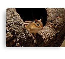 Chipmunk in tree hole - Ottawa, Ontario Canvas Print