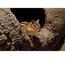 Chipmunk in tree hole - Ottawa, Ontario Photographic Print