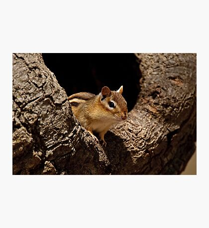 Chipmunk in tree hole - Ottawa, Ontario Photographic Print