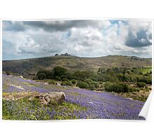 Holwell Bluebell Lawns Dartmoor Poster