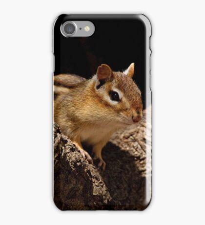 Chipmunk in tree hole - Ottawa, Ontario iPhone Case/Skin