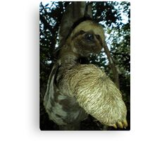 The Sloth Canvas Print