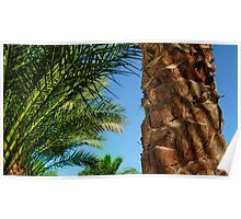Egyptian Palm shadows Poster