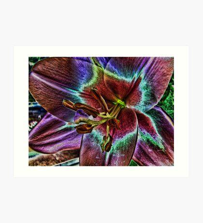 Multi - Colored Lily Art Print