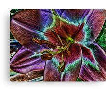 Multi - Colored Lily Canvas Print