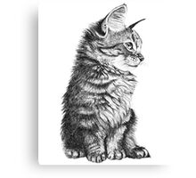 Sketch Kitten Canvas Print