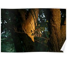 Late sun, Englewood Reserve, Ohio 2005 Poster