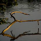 Branch inthe lake, Englewood Reserve, 2005 by jackmbernstein