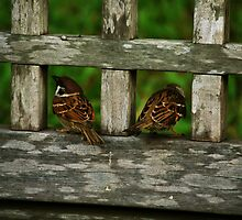 Grumpy sparrows by Buttered Toast Creative