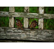 Grumpy sparrows Photographic Print