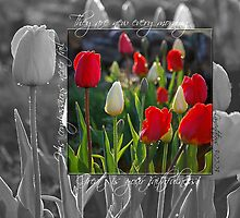 Tulips by back40fotos