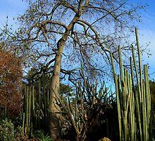 Huntington Botanical Gardens by Tom-Sky