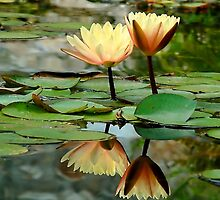 Lotus Reflection by Nick Conde-Dudding