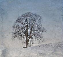 The white fane by Maria Ismanah Schulze-Vorberg