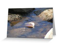 Shell Bath Greeting Card