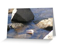 Fresh Water Bath Greeting Card