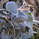 Frosted Leaves by WhoDini