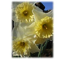 Daffy Dils Photographic Print