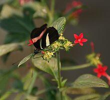 Butterfly I by Viki B