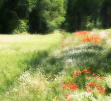 Provence Field by Christine Wilson