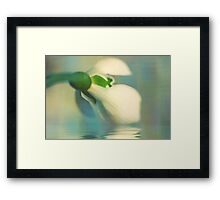 To a snowdrop Framed Print