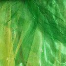 Shimmering green by Marjolein Katsma