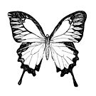 Black and White Butterfly by SMalik