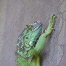 chilling iguana by harryland93