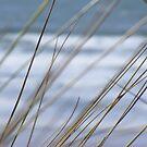 beach grass by harryland93