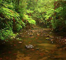 Julius River nor west Tasmania , Australia by phillip wise