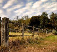 Edge of Loughton Lake, Buckinghamshire by Nick Bland