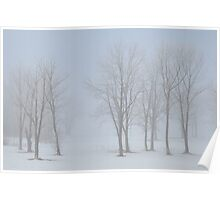 trees in the fog at amman reservoir Poster
