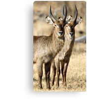 Horned Symmetry Canvas Print
